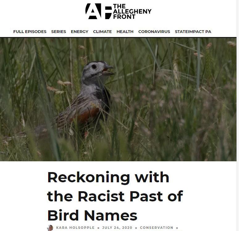 birds is racist
